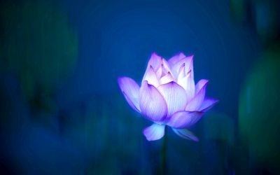 Beneath the lotus flower: discovering organisational cultures