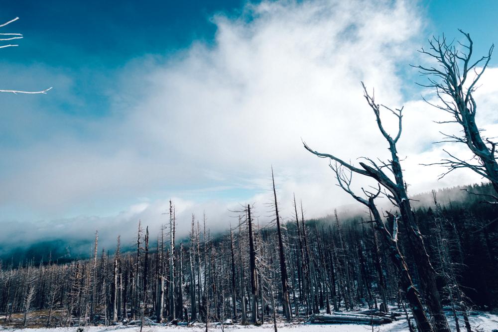 Climate Change Denial and Australia's Devastating Bush Fires